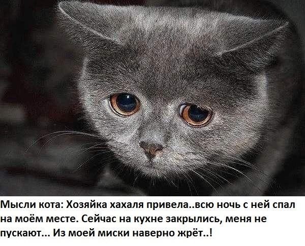 http://s3.uploads.ru/0PTc1.jpg