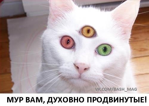 http://s3.uploads.ru/0RSvX.jpg