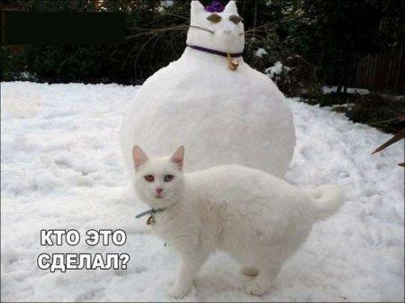http://s3.uploads.ru/0dv5V.jpg