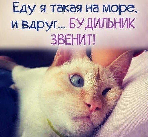 http://s3.uploads.ru/0wEGx.jpg