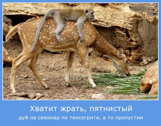 http://s3.uploads.ru/1Hfvn.jpg