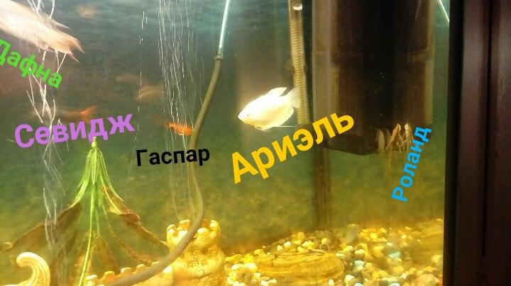 http://s3.uploads.ru/1OzEd.jpg