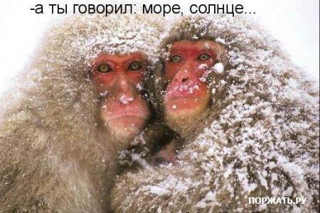 http://s3.uploads.ru/2WSqo.jpg