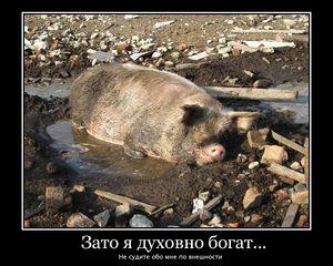 http://s3.uploads.ru/2YBFX.jpg