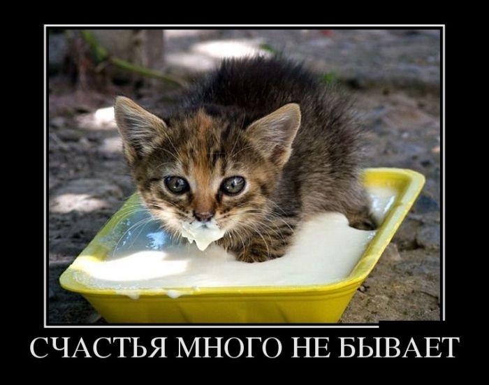 http://s3.uploads.ru/4L1rZ.jpg
