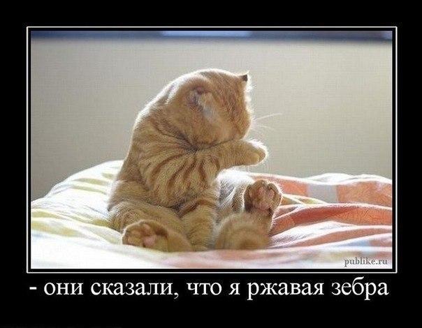 http://s3.uploads.ru/4tsar.jpg