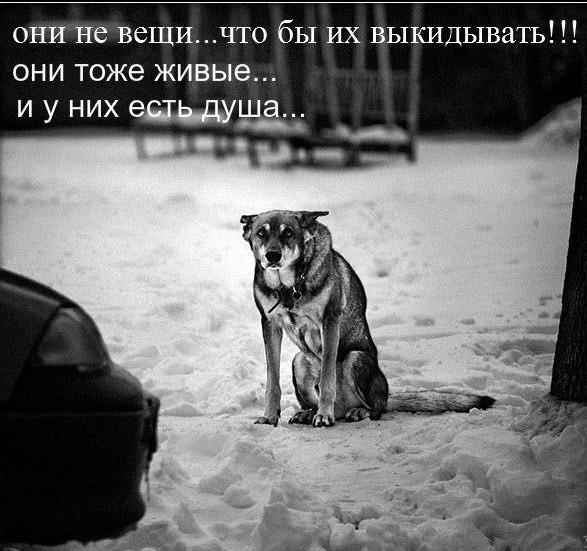 http://s3.uploads.ru/5S9ks.jpg