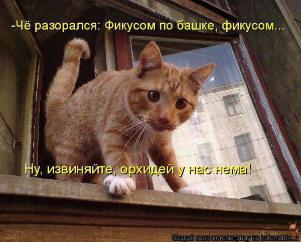 http://s3.uploads.ru/5o1IM.jpg