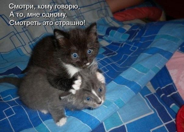 http://s3.uploads.ru/6ntlc.jpg