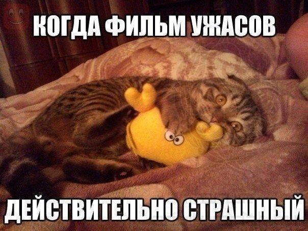 http://s3.uploads.ru/6tpUT.jpg