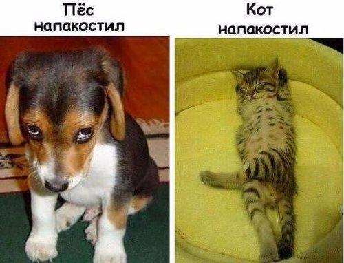http://s3.uploads.ru/8QxVT.jpg