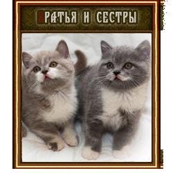 http://s3.uploads.ru/AbQrC.png