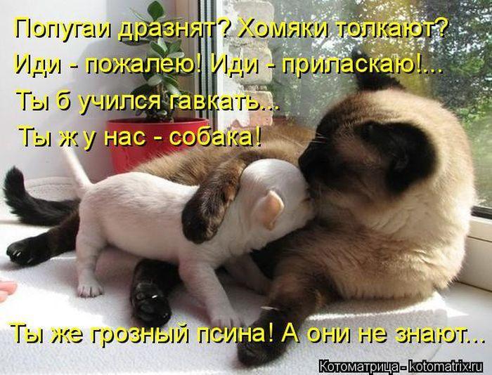 http://s3.uploads.ru/Amq1W.jpg
