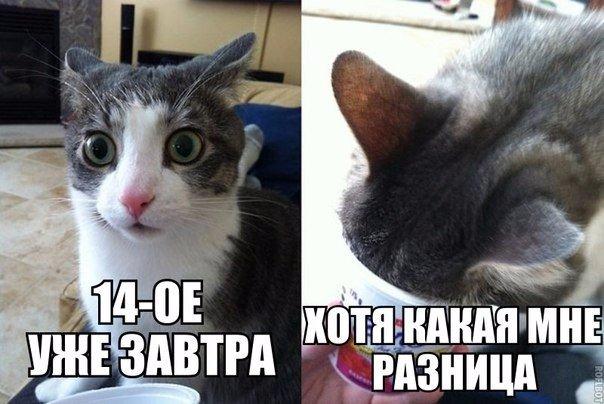 http://s3.uploads.ru/Asgq1.jpg