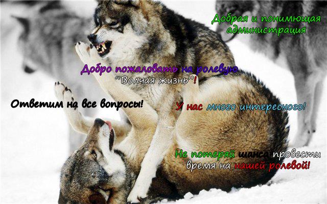 http://s3.uploads.ru/BpwIW.png