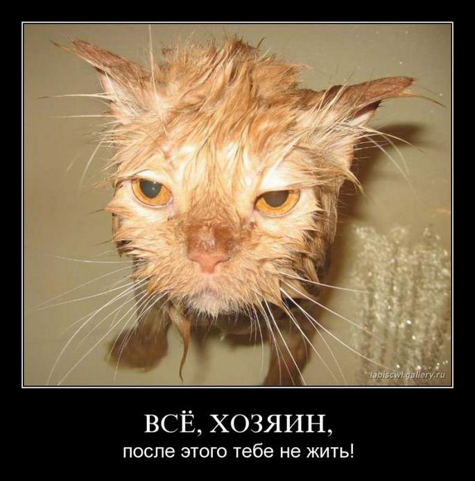 http://s3.uploads.ru/CyMOb.jpg