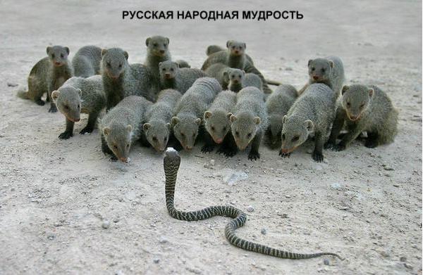 http://s3.uploads.ru/DroC3.png