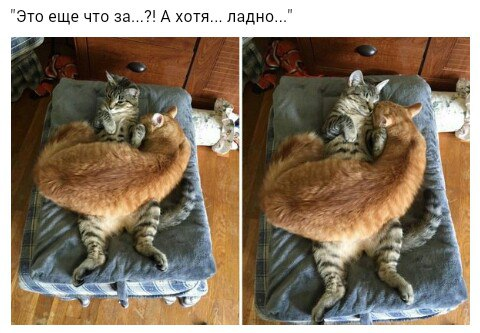 http://s3.uploads.ru/HjoUa.jpg