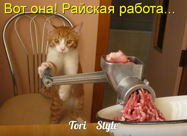 http://s3.uploads.ru/Hpd5I.jpg