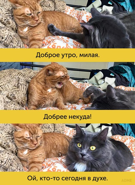 http://s3.uploads.ru/HtGMS.jpg