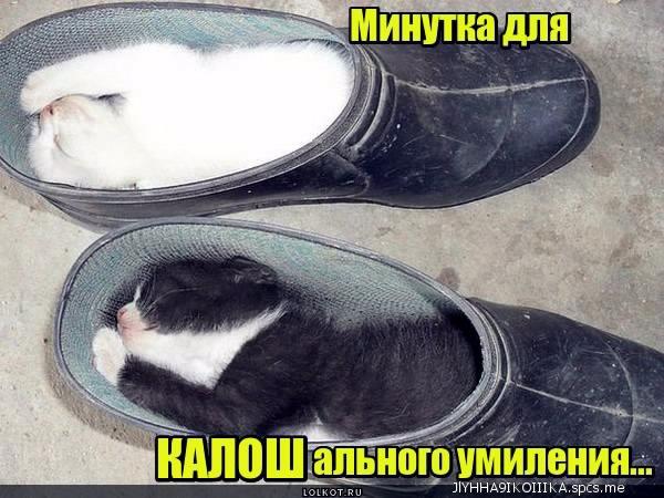 http://s3.uploads.ru/HvqXA.jpg