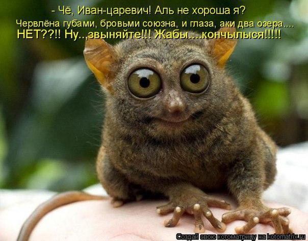 http://s3.uploads.ru/Igmae.jpg