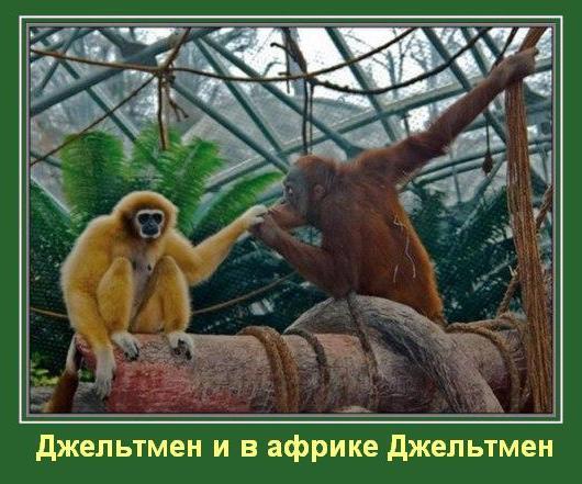 http://s3.uploads.ru/LH9aI.jpg