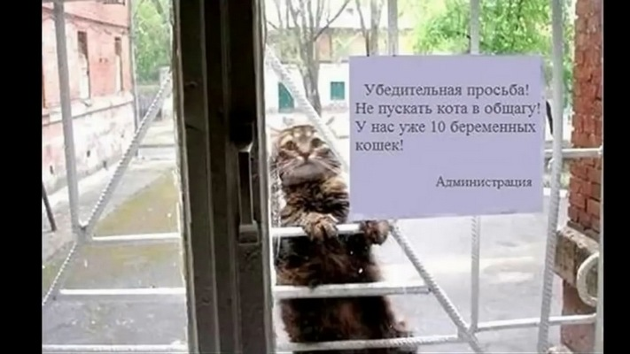 http://s3.uploads.ru/LoOj8.jpg