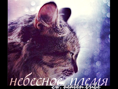 http://s3.uploads.ru/NRrT1.png