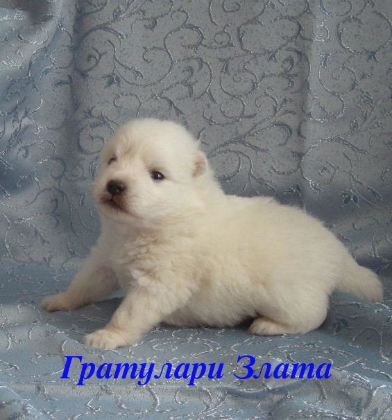 http://s3.uploads.ru/NbmgW.jpg