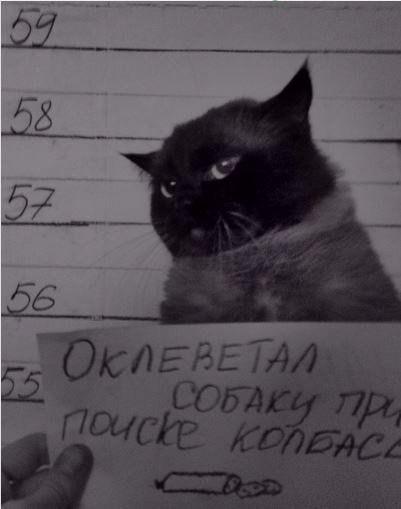http://s3.uploads.ru/Nf0zy.jpg