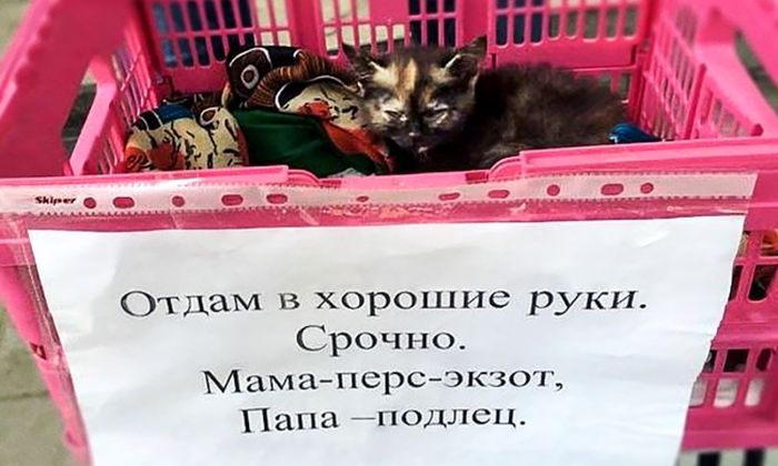 http://s3.uploads.ru/NlerD.jpg