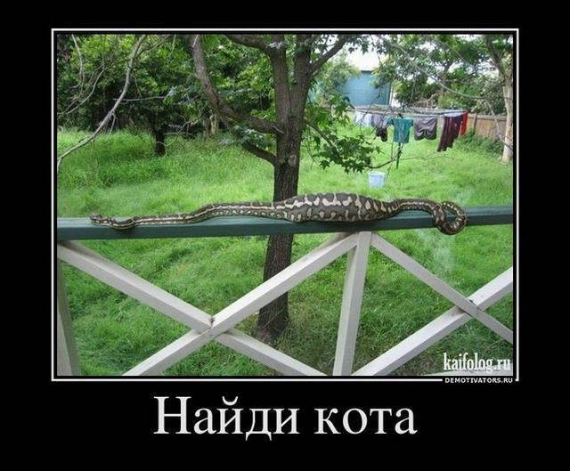 http://s3.uploads.ru/OofjX.jpg