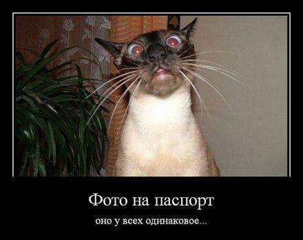 http://s3.uploads.ru/PCuVJ.jpg