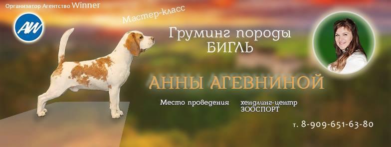 http://s3.uploads.ru/PDXIp.jpg