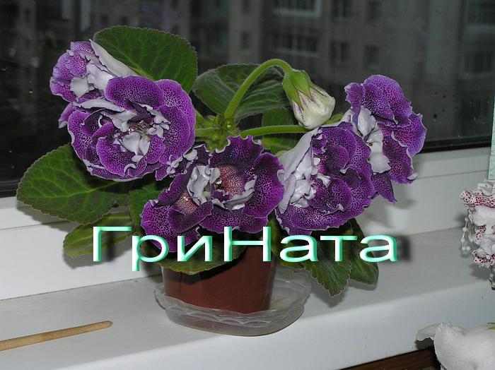 http://s3.uploads.ru/RVjJ2.jpg