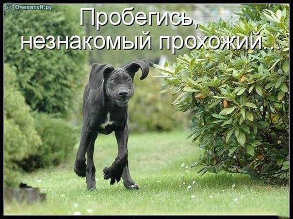 http://s3.uploads.ru/SQZub.jpg