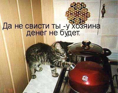 http://s3.uploads.ru/Um5zt.jpg