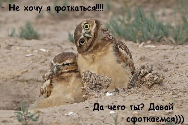 http://s3.uploads.ru/Uupxm.jpg