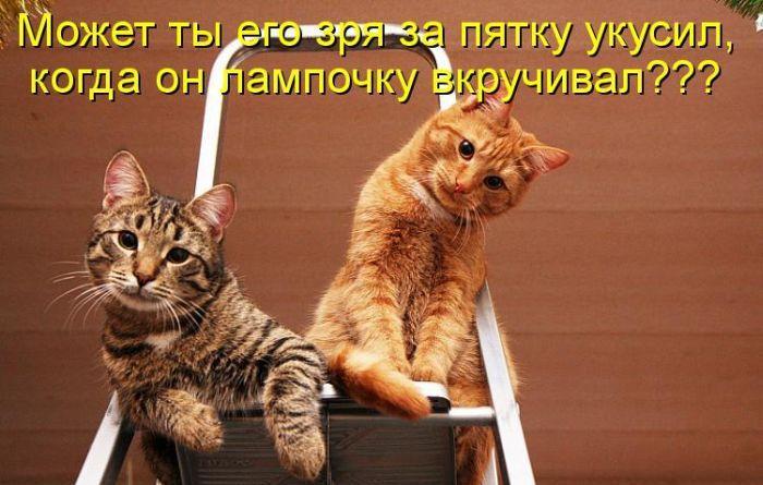 http://s3.uploads.ru/V0RSK.jpg
