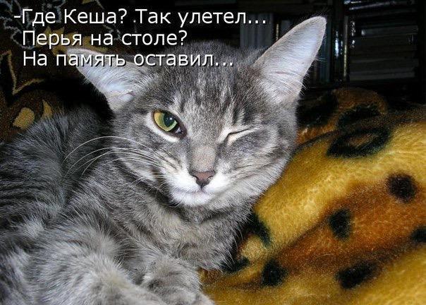 http://s3.uploads.ru/V6L4H.jpg