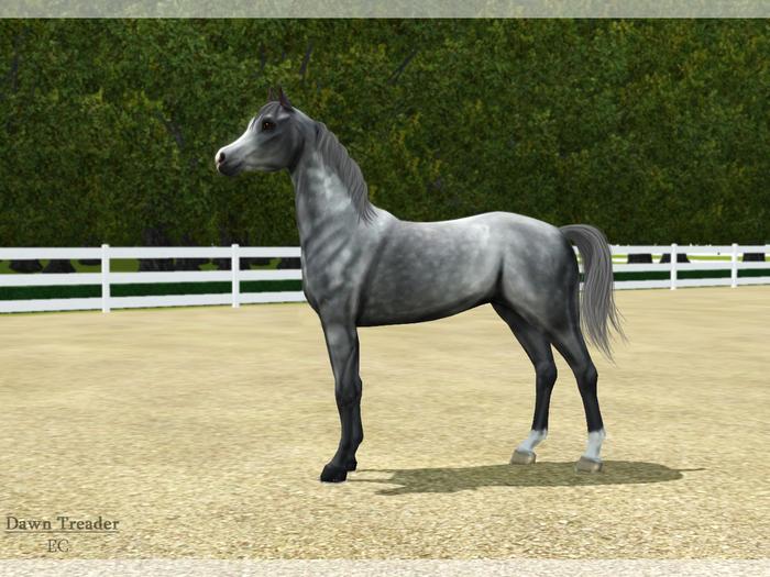 Регистрация лошадей в RHF 1.1 - Страница 2 WIfBY