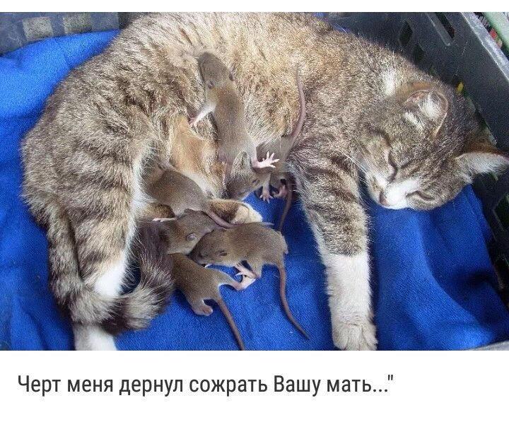 http://s3.uploads.ru/Wq3Qp.jpg