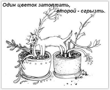http://s3.uploads.ru/X4VRQ.jpg