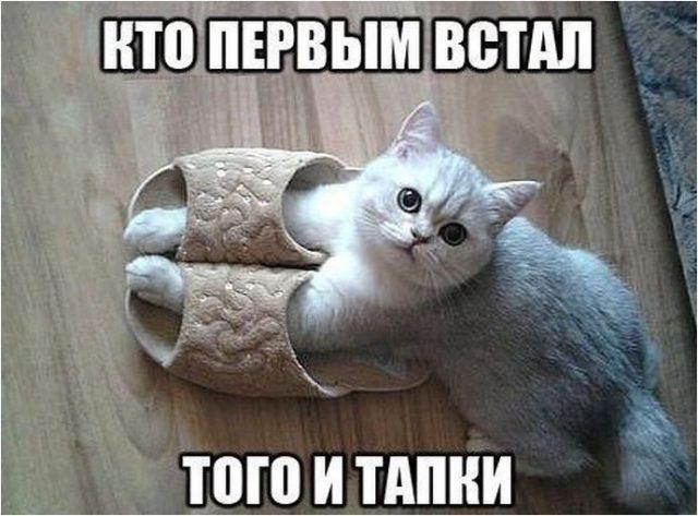 http://s3.uploads.ru/YQ7aj.jpg