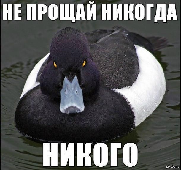 http://s3.uploads.ru/YT2LF.jpg