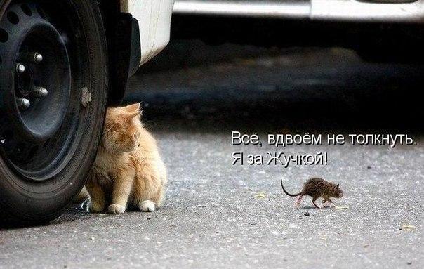 http://s3.uploads.ru/ZAeJF.jpg