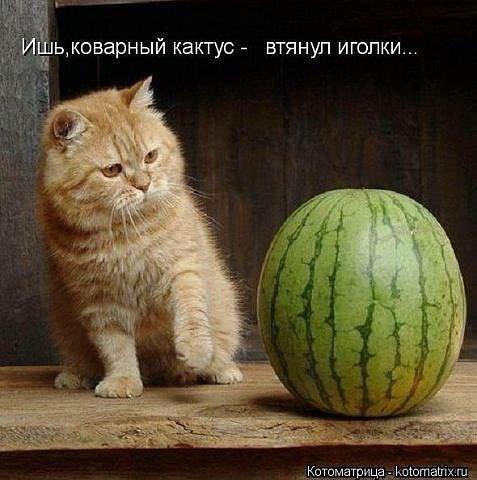 http://s3.uploads.ru/ZGf5i.jpg