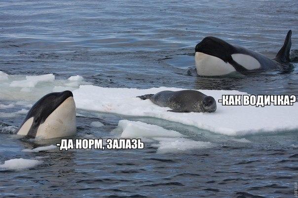 http://s3.uploads.ru/aWNnH.jpg