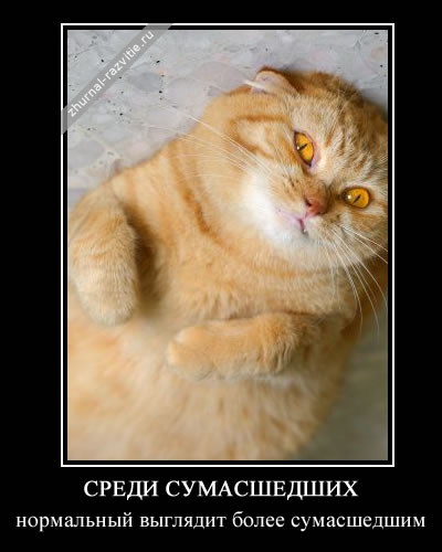 http://s3.uploads.ru/b7yqd.jpg